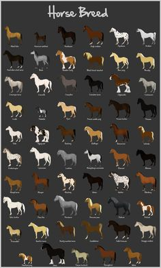 Horse Breeds chart... there are a lot more breeds but this is pretty comprehensive, with a lot of European breeds, a few Russian, American breeds, Indian, Icelandic, and Australian.
