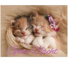 Nighty Night, Good Night, Humor, Cats, Animals, Good Night Cat, Good Night Friends, Good Nite Images, Funny Pics