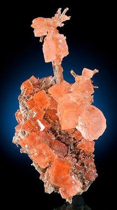 Transparent Halite cubes on Gypsum crystals