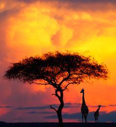 Capturing the Wild: Safari Photography | KelbyOne Course with Rick Sammon