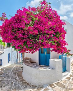 Lefkes, the highest village on the island of Paros, Greece, was once the medieval capital of the island and today, it's a picturesque… Greece Today, Santorini Greece, Paros Greece, Beautiful Flowers, Beautiful Places, Paros Island, Decoration Entree, Greece Travel, Greek Islands