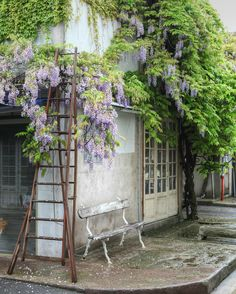 The photo below was taken at the Paris flea market ~ Marche Paul Bert.  The wisteria was in bloom while we were there, and it was spectacular.  I just loved the vintage French ladder propped up among the wisteria...