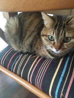 favd_kinaco-cat-January 14 2018 at 08:08PM
