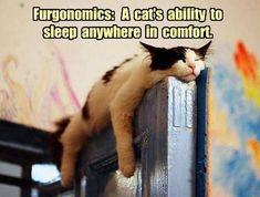 Do not disturb. #cats