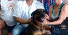 Cadela agredida pelo dono com um facão em Pirajuí ganha novo lar