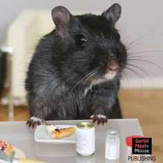 PIZZA?!? - Petri #gerbil #dollhouse #miniature #mini #miniatures #dollshouse #doll #rodent #petsofinstagram #pets_of_our_world #petsofig #hamster #rat #rodentsofinstagram #smallpete #pocketpets #rement #pizza #pizzaparty #summertime #saturday
