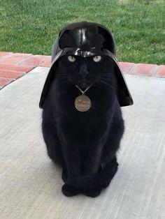 A imagem pode conter: gato