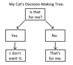 My Cat s Decision Making Tree