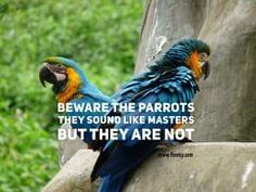 The parrot is not a master Sounds Like, Parrot, Teaching, Bird, Quotes, Animals, Parrot Bird, Quotations, Animales