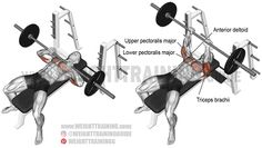 Close-grip barbell bench press. A compound push exercise. Target muscle: Triceps Brachii. Synergists: Lower Pectoralis Major, Upper Pectoralis Major, and Anterior Deltoid. Dynamic stabilizer (not highlighted): Biceps Brachii (short head only). Use a shoulder-width grip for best results.