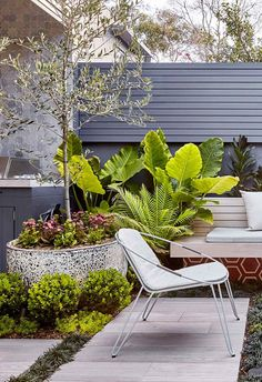 Large pavers are paired with lush groundcover grasses in this backyard courtyard., Large pavers are paired with lush groundcover grasses in this backyard courtyard…, Terrace Garden, Garden S, Garden Paths, Garden Ideas, Small Terrace, Balcony Gardening, Large Pavers, Wisteria Plant, Sydney Gardens
