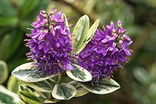Shrubs Check out 44 Best Shrubs for Containers. You'll like to have some of these shrubs right away in your container garden. - Check out 44 Best Shrubs for Containers. You'll like to have some of these shrubs right away in your container garden. Container Flowers, Container Plants, Container Gardening, Gardening Tips, Urban Gardening, How To Grow Lemon, Garden Shrubs, Garden Web, Butterfly Bush