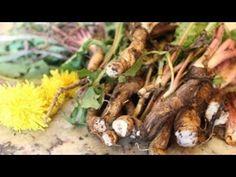 Juice Of Dandelion Root In The Treatment Against Liver Cirrhosis Dandelion Recipes, Edible Wild Plants, Super Greens, Wild Edibles, Edible Flowers, Medicinal Plants, Natural Medicine, Permaculture, Diy Food