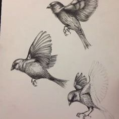 sparrow drawing tattoo - Google Search