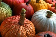 {Pumpkin Patch Tones} Nature made color / Autumn / #laylagrayce #suryarugs