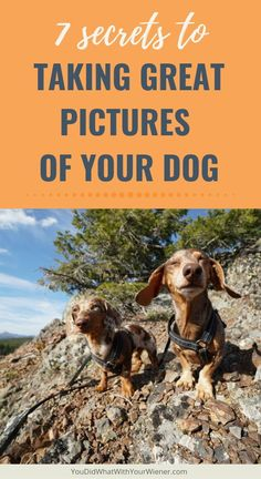 201 Best Pet Parent Tips images in 2019 | Dogs, Dog care, Pets