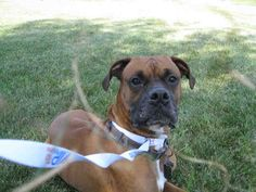 MD PetHarbor.com: Animal Shelter adopt a pet; dogs, cats, puppies, kittens! Humane Society, SPCA. Lost & Found.