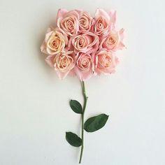 Rosas <3 #rose #flower #inspiration #inspiração