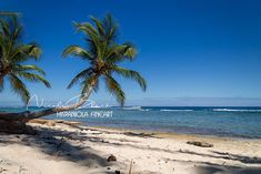 Caribbean Beach scene Beach Backdrop premade Backdrop | Etsy Dinosaur Background, Beach Backdrop, Digital Backgrounds, Digital Backdrops, Beach Scenes, Photography Backdrops, Beautiful Images, Caribbean, Fine Art