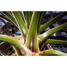 Beneficios y propiedades del Aloe Vera   eHow en Español