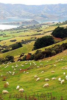 Akaroa Harbour | Banks Peninsula New Zealand | Geof Wilson | Flickr