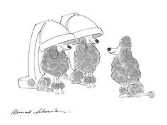 size: Premium Giclee Print: Poodle dogs, under hair drying matchines. - Cartoon by Bernard Schoenbaum : I Love Dogs, Cute Dogs, Poodle Cuts, Tea Cup Poodle, Poodle Grooming, Bikini, Animal Games, Dog Show