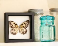 Real Framed Butterfly