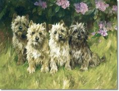 Arthur Wardle - Cairn Terriers by a Rhododendron Bush