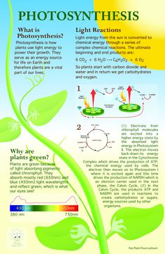 Free ngss science lessons for photosynthesis from next gen lesson photosynthesis is the process that allows solar energy to be converted into chemical energy a fandeluxe Choice Image