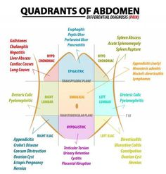 Quadrants of the Abdomen