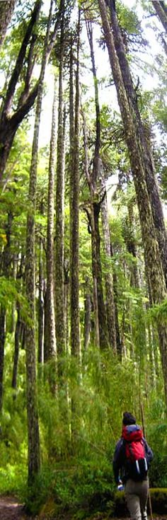 Go Hike - Villarrica National Park, Chile, part of our Chile Tours. Visit us at www.cascada.travel