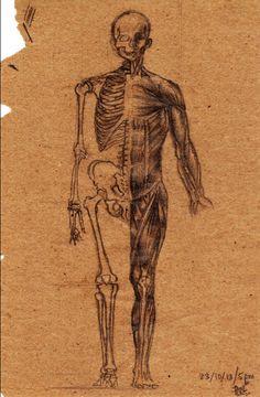 """Visual analysis of Jeno Barcsay's anatomical drawing"" by Vishwani Chauhan, pencil on packaging paper."