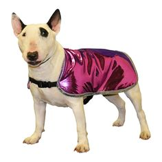 Designer Dog Cool Coat made custom for your dog with fashion trim - pinned by pin4etsy.com