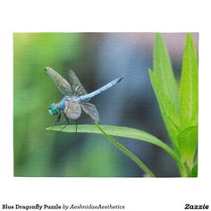 Blue Dragonfly Puzzle
