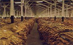 Eastern North Carolina farmers took their cured tobacco to warehouses such as this to sell at auction. Description from pinterest.com. I searched for this on bing.com/images