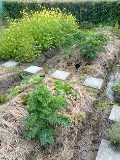 Emilia Hazelip bed. Permaculture, Stepping Stones, Bed, Outdoor Decor, Home Decor, Stair Risers, Stream Bed, Interior Design, Home Interior Design