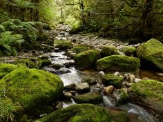 Rocky Creek, Grey District, West Coast.  This forest stream near Stillwater is typical of many that flow down from the Paparoa Range to the Grey River.