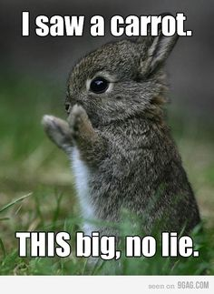 I saw this and immediately thought of my mother's obsession with bunnies :)