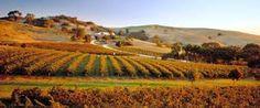 Barossa Valley Wineries - Google