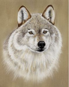 Wolf Pastel Painting by Colin Bradley using Pastel Pencils. Learn to draw Animal Pictures with Colin's lessons: https://www.colinbradleyart.com/home/draw-these-animals-using-pastel-pencils/ #PastelPencils #PastelArt #ColinBradleyArt