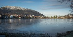 Tveitevatnet is a lake in Bergen a couple of miles from the city centre which always attracts a lot of birdlife, even when frozen over as it was when I visited a few days ago. I was lucky enough to…