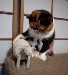 hey lamb.