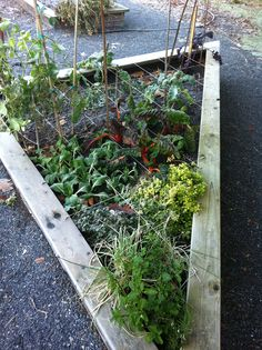 Square foot gardening in action at Vancouver's City Hall community garden