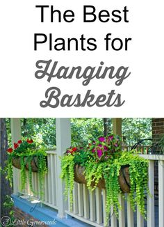 Great read before heading to the nursery ~ tips for creating beautiful lush hanging basket displays.