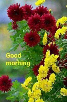 Good Morning I love you I hope you slept well I didn't. Good Morning Flowers, Good Morning Good Night, Good Morning Wishes, Good Morning Quotes, Morning Gif, Rare Flowers, Amazing Flowers, Beautiful Roses, Beautiful Flowers
