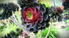 Alec's Plants on Pinterest   Weird Plants, Air Plants and Succulents