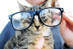 Cat in glasses. No, seriously, cat-in-glasses. LOL!