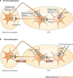 Beyond classical benzodiazepines: novel therapeutic potential of GABAA receptor subtypes