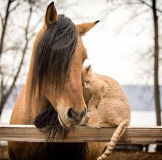 Friends, horse and cat nuzzling.