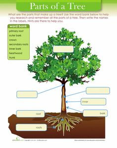 Parts of a tree for kids worksheets life science and school tree diagram publicscrutiny Choice Image